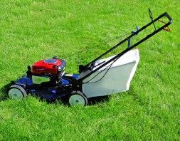 Lawn care in Brisbane